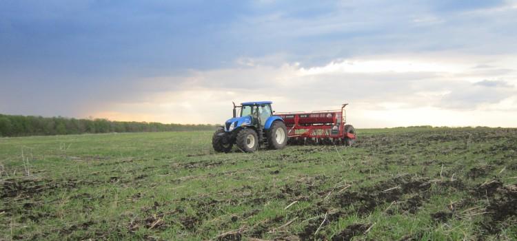 Неидеальные условия прямого посева в Харькове