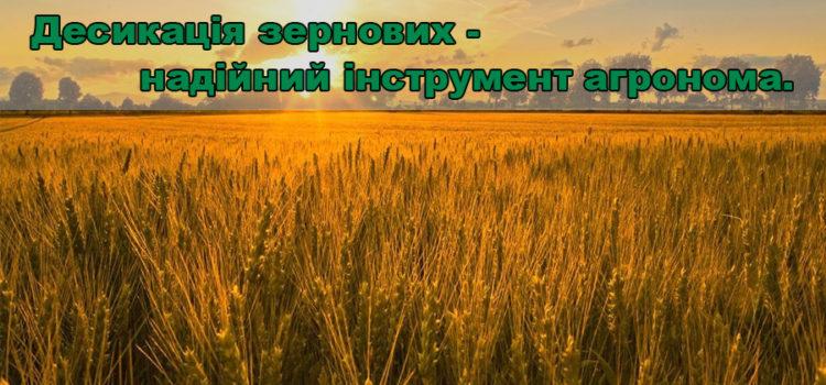 Десикація зернових колосових в Ноу-Тілл – навіщо та як?
