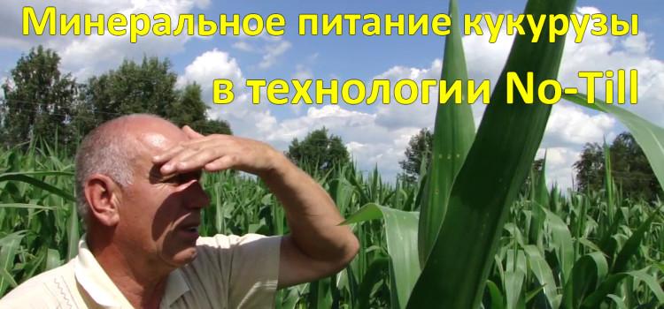 Рассчитываем норму удобрений кукурузы вместе. Советы эксперта.