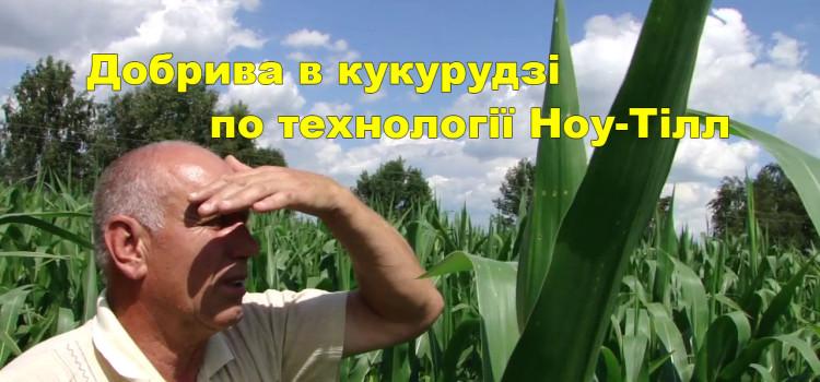 Розраховуємо норму добрив кукурудзи разом. Поради експерта.