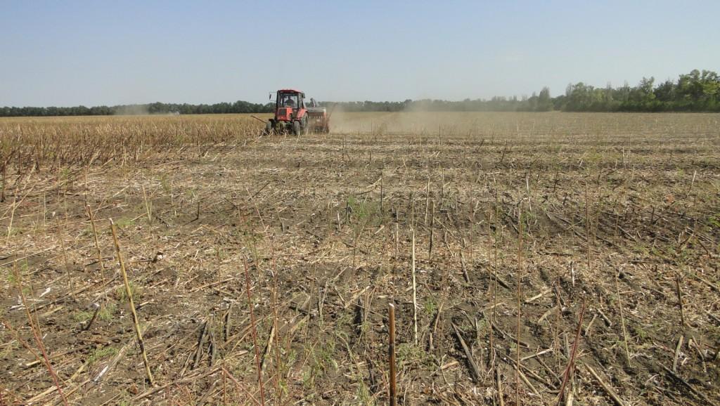 Когда сажать озимую пшеницу в подмосковье 96