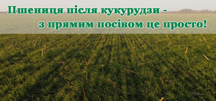 Кукурудза, як попередник для озимої пшениці