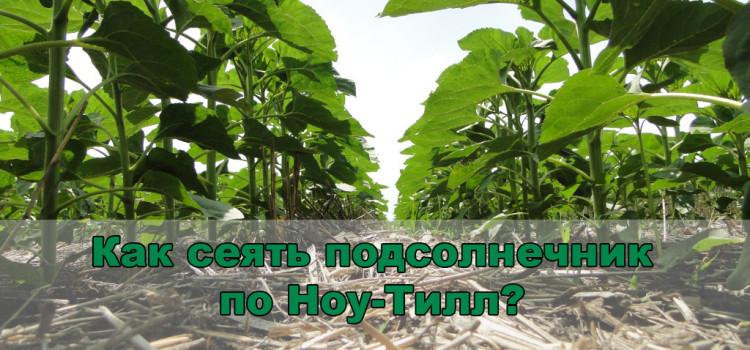 Что нужно знать о качественном посеве подсолнечника по ноу-тилл?