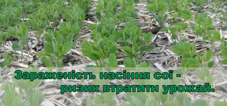 Як знизити ризики при виборі насіння сої – три необхідних кроки.