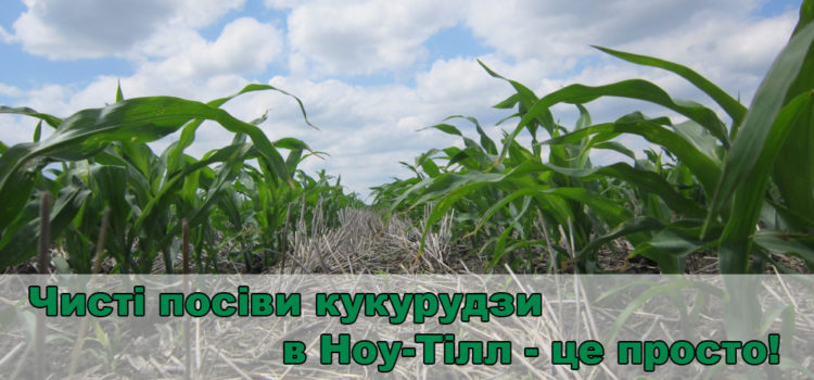 Кукурудза по Ноу-Тілл: як забезпечити чистоту посівів від бур'янів?