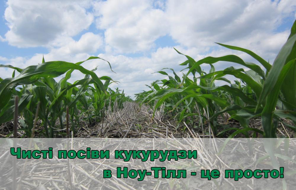 kukuruza-ua