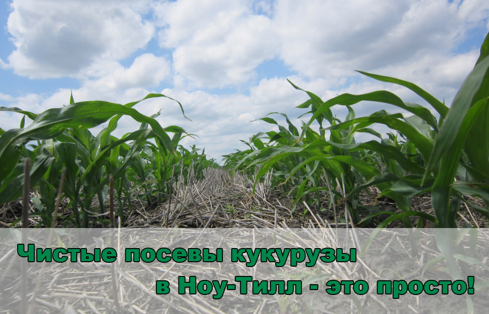 kukuruza-ru