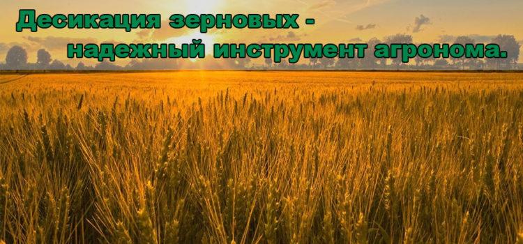 Десикация зерновых колосовых в Ноу-Тилл — зачем и как?