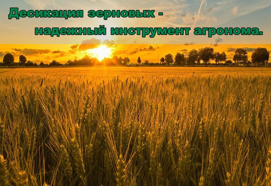 golovne-ru