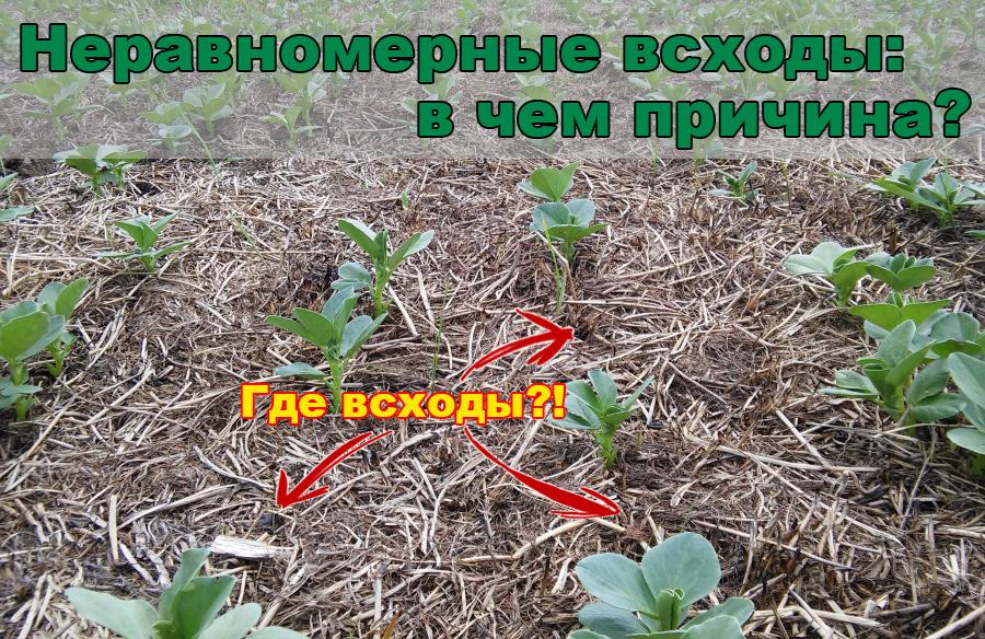 skhody-gol-ru