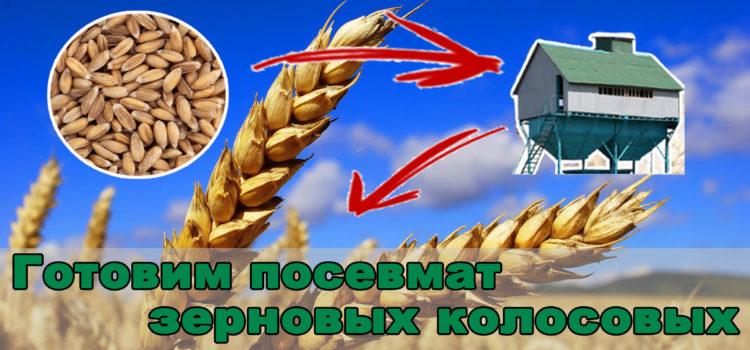 Требования Агромира к посевному материалу зерновых колосовых культур.