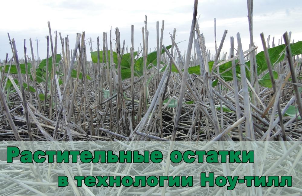 roslynni_reshtky_golovna_ru