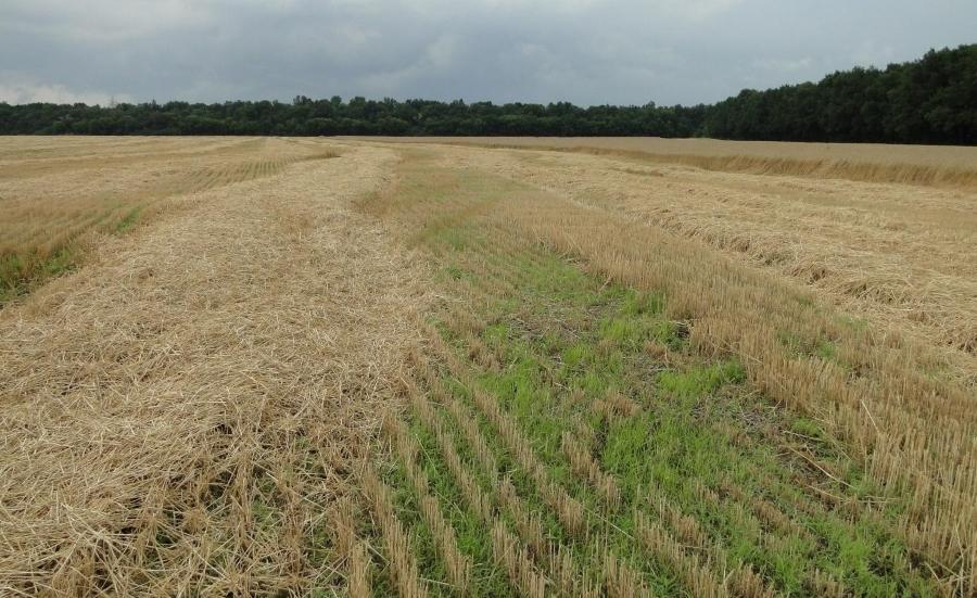 Якісний посів, погані сходи і малий урожай на цьому полі гарантовані!