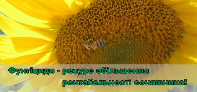 Як підвищити урожайність соняшника. Фунгіциди як один із дієвих шляхів.