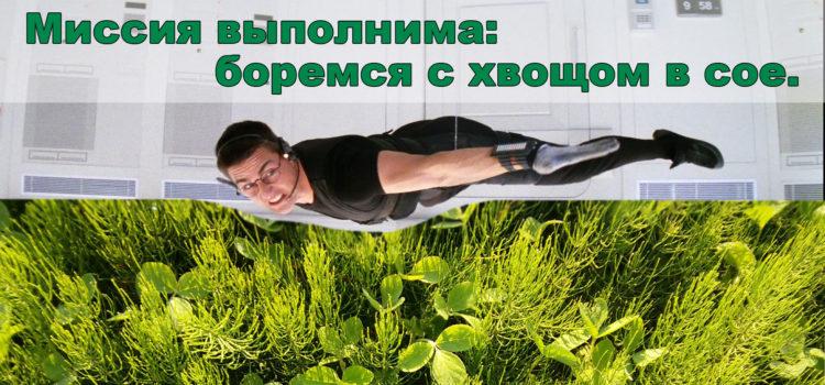 Миссия выполнима: как бороться с хвощом полевым в посевах сои по технологии Ноу-тилл?