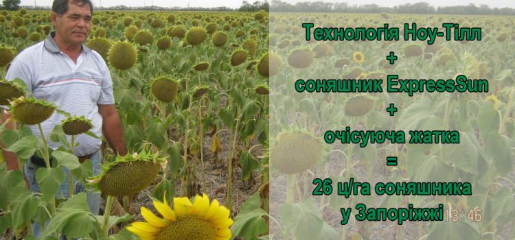 Як не залежати від опадів і отримувати гідний урожай соняшнику.