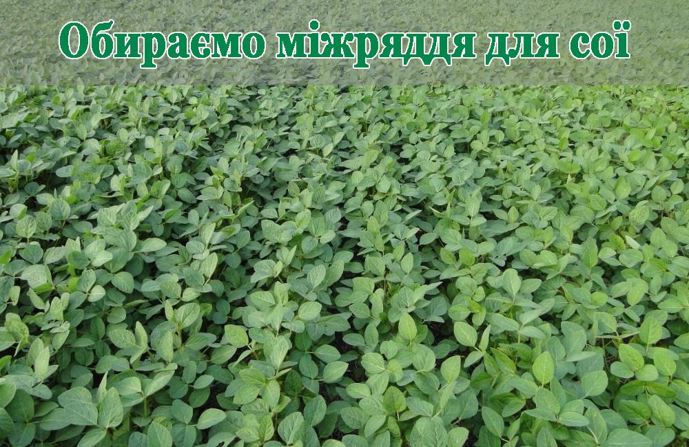 soja-glavn-ua