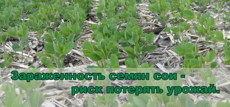 Как снизить риски при выборе семян сои — три необходимых шага.