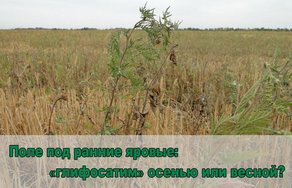 ranni yarovie-glavn-ru