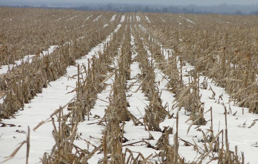 Рівномірний сніговий покрив завтовшки 15-20 см на ноутільному полі. 23 лютого, с. Веселівка, Кіровоградська область.