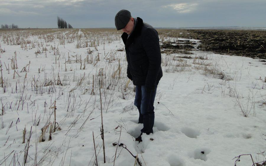 Товщина снігового покриву 23 лютого на ноутільном поле, с. Веселівка, Кіровоградська область. На задньому плані: чорне «оброблене» поле вже без снігу.