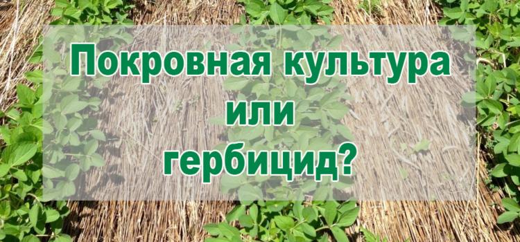 Можно ли заменить гербициды покровными культурами в no-till?