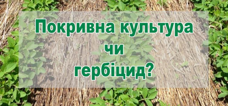 Чи можна замінити гербіциди покривними культурами в no-till?