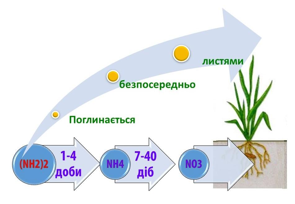 azot-2-ua