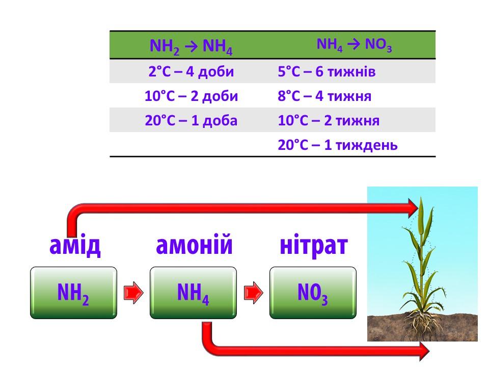 Вплив температури на швидкість трансформації форм азоту.