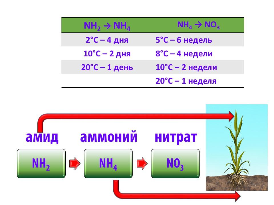 Влияние температуры на скорость трансформации форм азота.